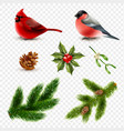 winter birds fir branches set vector image