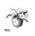 flowering apple branch vector image