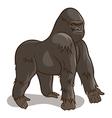 Gorilla vector image