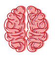 human brain anatomy to creative and intellect vector image