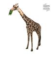 Giraffe polygon vector image