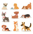 funny cartoon dogs characters different breads vector image vector image