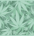 hemp leaves seamless pattern vector image