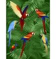 macaw bird vector image vector image