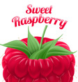Poster sweet raspberry vector image vector image