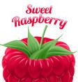 Poster sweet raspberry vector image