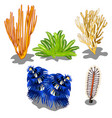 set of colorful marine algae and underwater vector image