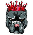pitbull in crown on white background vector image vector image