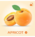 set of two fresh apricots with leaf vector image vector image