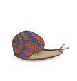 snail wild life zen tangle vector image