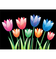 tulips vector image vector image