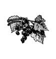 black-currant vector image