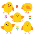 thumbprint easter chicks vector image vector image