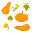 Set of pumpkins and flowers isolated on white vector image