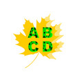 a b c d letters in the background of maple leaf vector image vector image