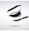 female eye with long eyelashes vector image