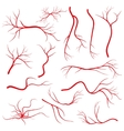Human eye veins vessel blood arteries isolated vector image vector image