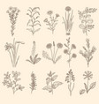 medical herbs sketch botanical floral therapy vector image vector image