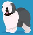 old english sheepdog vector image