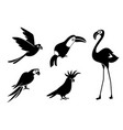 silhouettes birds cockatoos flamingos vector image