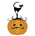 black cat on a halloween pumpkin isolated vector image vector image