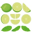 lime vector image vector image
