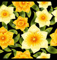 seamless background with yellow daffodil narcissus vector image vector image