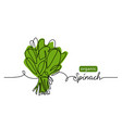 spinach organic green leaf salad bunch vector image