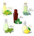 essential oils vector image vector image