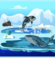 cartoon arctic fauna template vector image