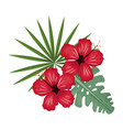 hibiscus flower tropical image vector image