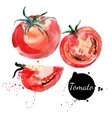 Tomato set Hand drawn watercolor painting on white vector image vector image