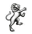 a heraldic lion in engraving style vector image vector image