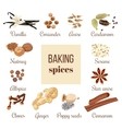 Backing spices big set vector image vector image