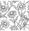 echinacea seamless pattern vector image vector image