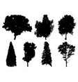 silhouettes of different trees vector image