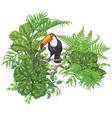tropical plants and sitting toucan vector image vector image