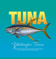 yellowfin tuna vector image