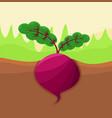 beetroot growing in ground vector image vector image