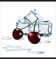 ice cubes drops of water snd cherry berries vector image vector image