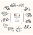 Nuts Package Design vector image