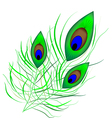 Peacock quill vector image vector image