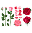 pink and red rose sweet romantic flowers spring vector image