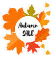 set of autumn yellow leaves and circular emblem vector image