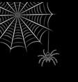 spider web and spider vector image vector image