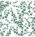 eucalyptus seamless pattern in rustic style on vector image