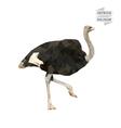 Ostrich polygon vector image vector image