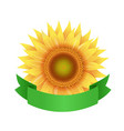sunflower flowers with green ribbon isolated vector image vector image