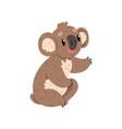 cute koala bear australian marsupial animal vector image vector image