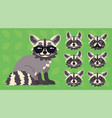 cute raccoon sitting of cool vector image